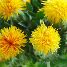 홍화씨유(Safflower Oil)